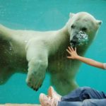 Nyíregyháza Állatpark és Óceánárium