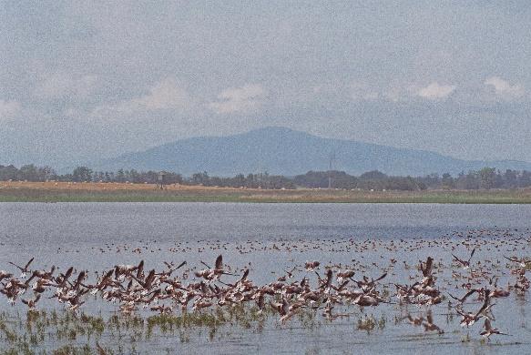 Tiszavasvári Fehér-Szik Természetvédelmi Terület